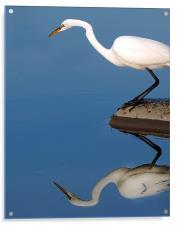 Mirrored Egret, Acrylic Print