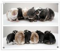 Shuffling Bunnies, Acrylic Print
