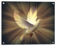 Dove of Peace., Acrylic Print