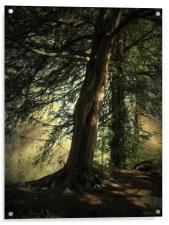 Forest Awakening., Acrylic Print