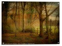 Winter Woodland., Acrylic Print