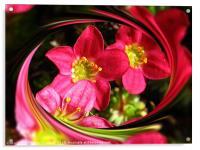 Pink Ladies, Acrylic Print