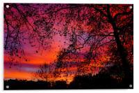 Sunrise in Green Park, Acrylic Print