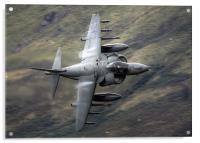 Harrier through the gap, Acrylic Print
