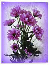 Chrysanthemums., Acrylic Print