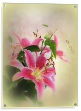 Lovely Lillies., Acrylic Print
