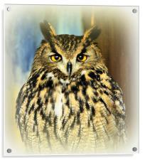 European Eagle Owl, Acrylic Print