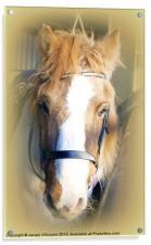 The Farm Horse, Acrylic Print