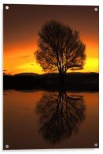 winter reflections, Acrylic Print