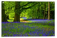 Bluebell Wood - Thorpe Perrow, Acrylic Print