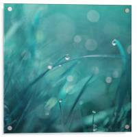 morning droplets, Acrylic Print