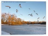 Winter in Stanley Park. Blackpool, Acrylic Print