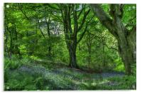 Billinge Woods Bluebells, Acrylic Print