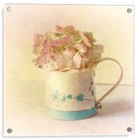 Pink Hydrangea, Acrylic Print