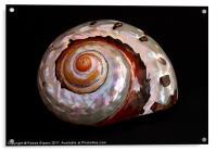 Sea shell on black, Acrylic Print