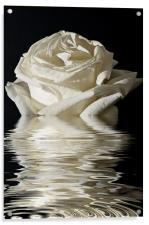 Rose Flood, Acrylic Print