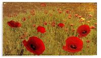 Poppy drift, Acrylic Print
