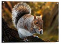 Squirrel retreat, Acrylic Print