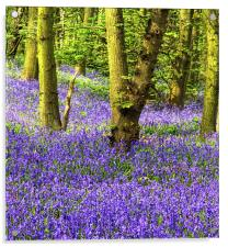If you go down to the Woods, Acrylic Print