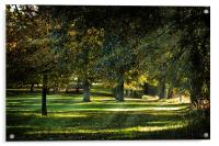 Dappled Light, Acrylic Print