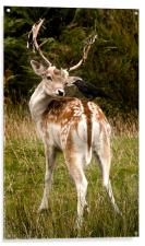 Bambie and Jack, Acrylic Print