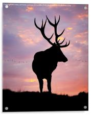 Stag And Sunset , Acrylic Print