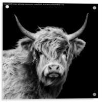 Highland Cow Portrait, Acrylic Print