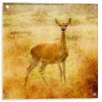 Deer, Acrylic Print