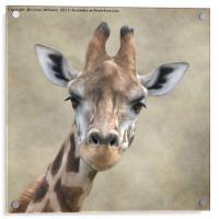 Giraffe Portrait, Acrylic Print