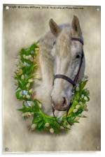 Horse 1, Acrylic Print