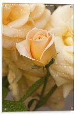 New Flower, Acrylic Print