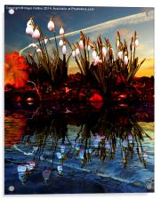 Snow Drop Reflections, Acrylic Print