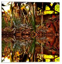 Daffodil Reflection, Acrylic Print