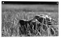 Tortoise in the Grass, Acrylic Print