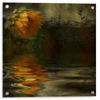 Summer Nights, Acrylic Print