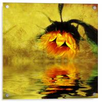 Sunflower Reflection of a Summer Day (3), Acrylic Print
