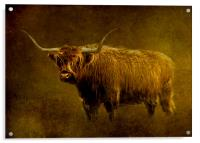 Highlander, Acrylic Print