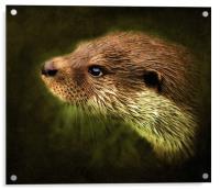 Otter, Lutra lutra., Acrylic Print