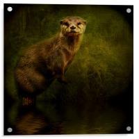 Otter Watch, Acrylic Print