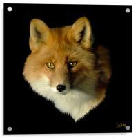 Red Fox, Acrylic Print