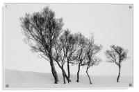 Winter Trees in a Field of Snow, Acrylic Print