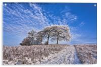Trees in the snow Polarised, Acrylic Print
