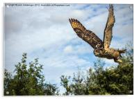Turkmanian Eagle Owl, Acrylic Print
