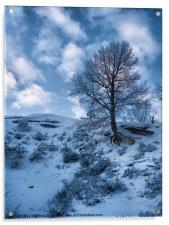 winter scene, Acrylic Print