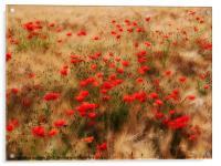 red poppy field, Acrylic Print