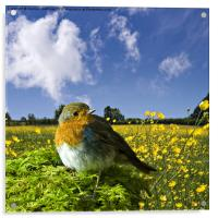european robin, Acrylic Print