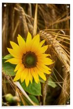 Summer Harvest, Acrylic Print