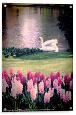 Two Swans, Acrylic Print