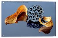 NELUMBO SEEDHEAD, Acrylic Print