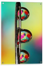 Needle with Tropical Droplets, Acrylic Print